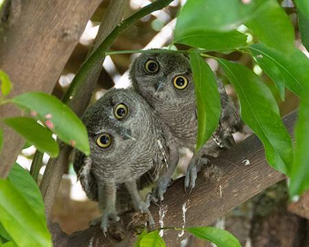 owls_3.jpg